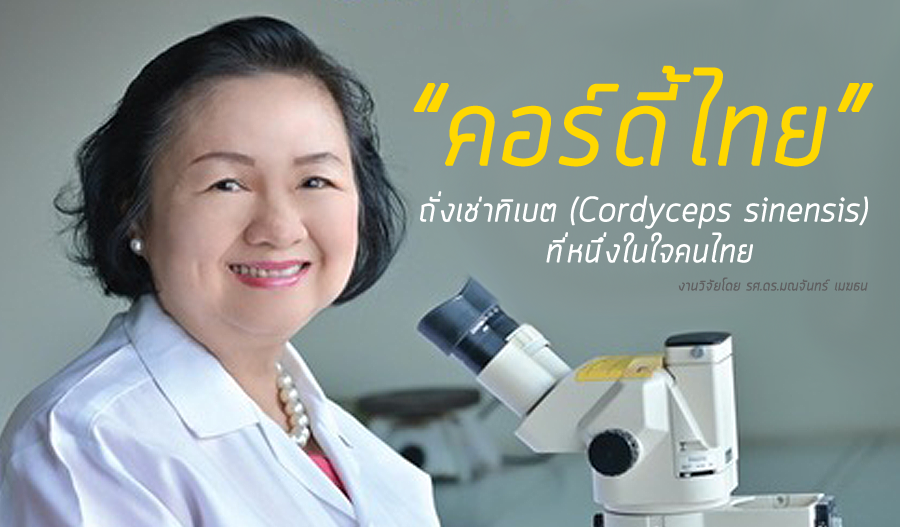 healthycordyceps_story_dr-monchan-mekthon