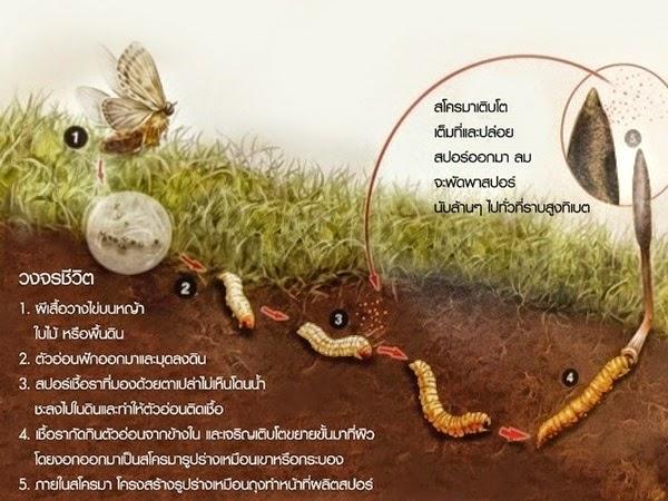 (เครดิตภาพ : thungchaoplus.com)